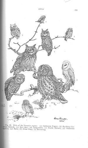 "A sketch titled ""Owls of the Yosemite Reg..."