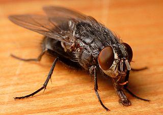 hausmittel gegen fliegen und stechm cken hausmittel f r den alltag