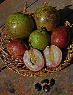 Beberapa kultivar sawo duren dari Lumajang, Jawa Timur