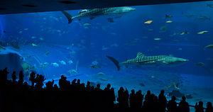 Churaumi Aquarium, Okinawa main tank 'Kuroshio...