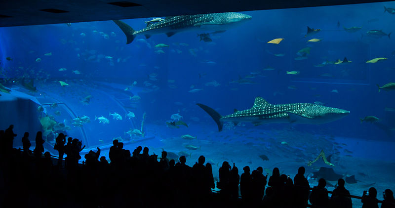 Need help writing my paper making the new england aquarium accessible to minority communities