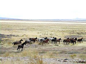 Free-roaming mustangs (Utah, 2005)
