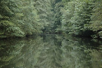 English: Reflections in Soudley Ponds Trees re...