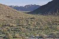 ソノラン砂漠NM(9406686984).jpg