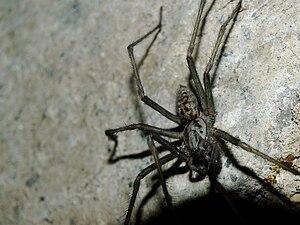 English: A spider Français : Une araignée