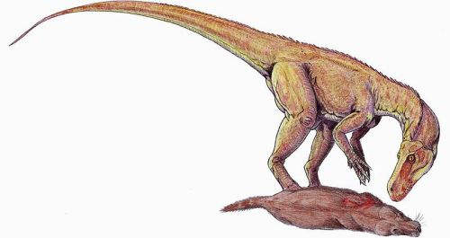 File:Herrerasaurus DB.jpg