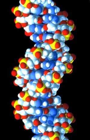 DNA molecule closeup