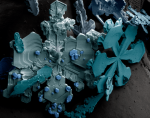 Snow flakes highly magnified by a low-temperat...
