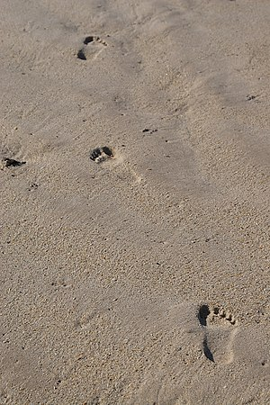 Footprints in sand, Vero Beach, Florida.