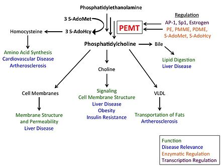 Image result for phosphatidylethanolamine phosphatidylcholine methyl