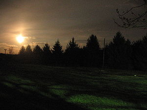 Trees by moonlight