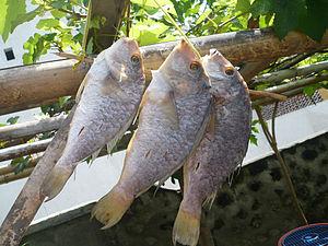 English: Dried fish, Bajo Lombok, Indonesia.