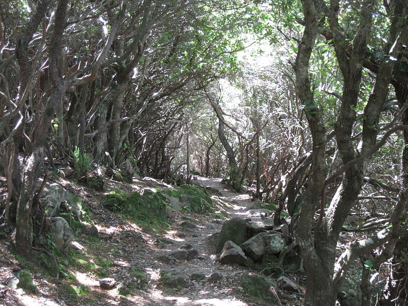 File:Forest corsica.jpg