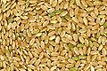Brown rice.jpg
