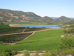Vineyards in the California wine region of Atl...