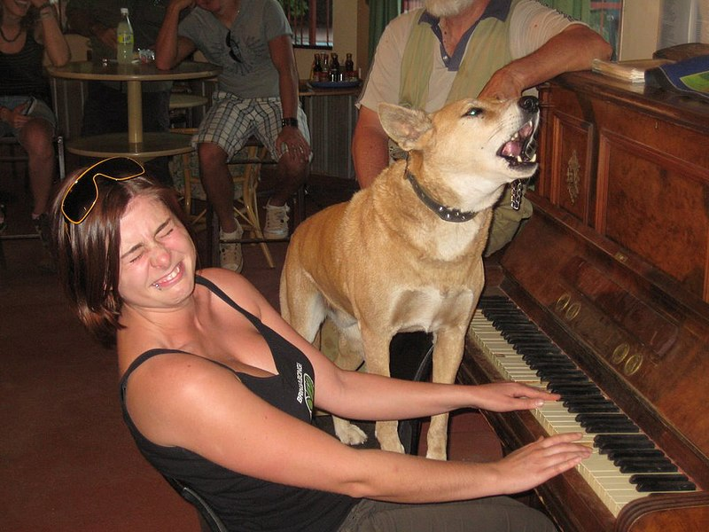 File:Singing dingo.jpg