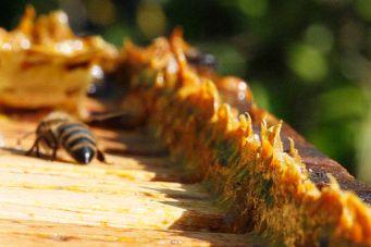 Propolis an einer Bienenbeute