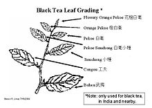 Tea Leaf Grading Wikipedia
