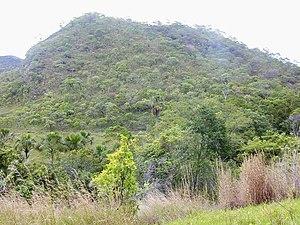 Cerrado vegetation of Brazil Español: Cerrado ...