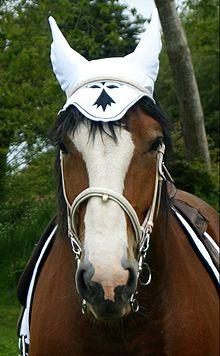 Cheval En Bretagne Wikipdia