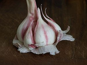 Pink garlic of Lautrec