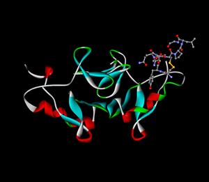 """oxytocin-neurophysin complex based on: """"C..."""