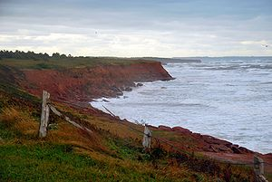 English: Prince Edward Island Cavendish red cl...
