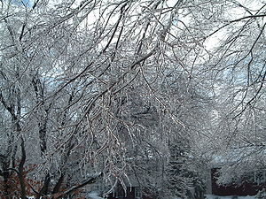 English: Ice buildup from the December 2004 wi...