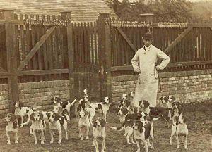 Caynsham Foot Beagle Pack
