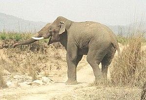 India's best safari spots! (1/3)
