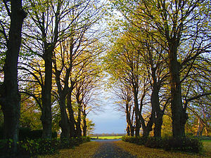 A tree-lined driveway.