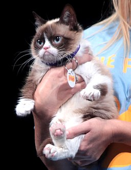 Grumpy Cat by Gage Skidmore Tardar Sauce