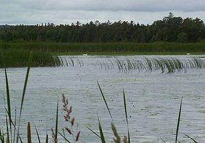 Presqu'ile Provincial Park, Presqu'ile Marsh