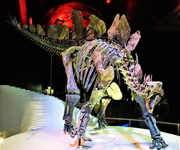Stegosaurus Stenops - Natural History Museum, London - Joy of Museums
