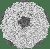 Common Cold Virus