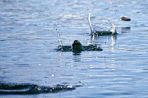 English: Stone skimming, Patagonia