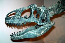 Allosaurus Wikipedia The Free Encyclopedia