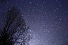 File:Night Sky Stars Trees 02.jpg