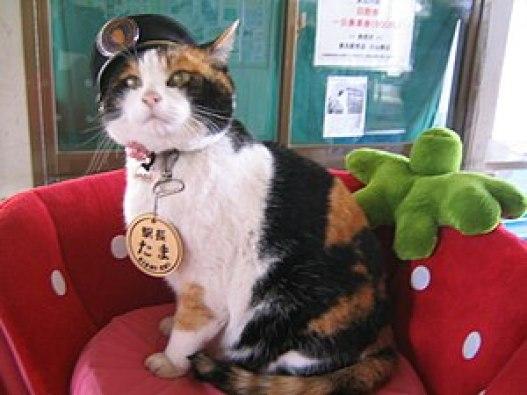 「猫駅長」の画像検索結果