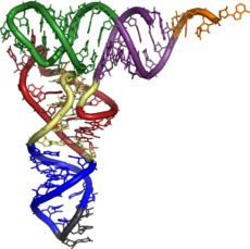Estructura del ARN de transferencia