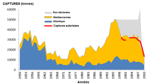 bluefin tuna catches since 1950 (Thunnus thynnus)