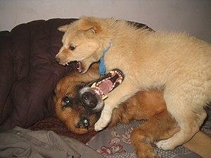 The looks are pretty aggressive. Both are pet ...