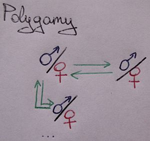 English: A schematic showing the polygamy rela...