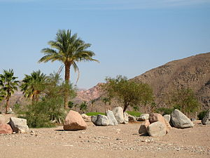 English: Taba Heights (Sinai, Egypt) Nederland...