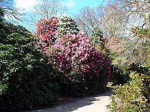 English: Heligan Gardens Sunny Spells