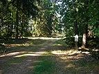 Forstweg vom Parkplatz zu den Jagen 147 und 138