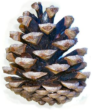 PH Artichoke Pendant has a form similar to a C...