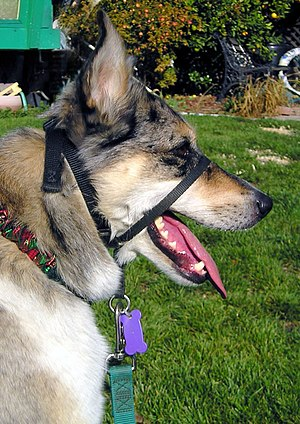 English: Dog halter-style collar Photo by Elf