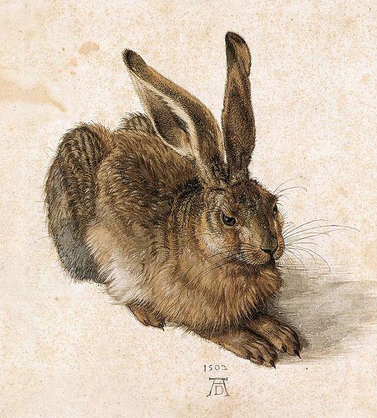 Durer, Hare
