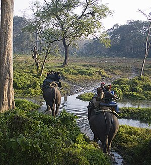 English: Jaldapara Wildlife Sanctuary is a pro...